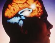 Зачем человеку мозг?